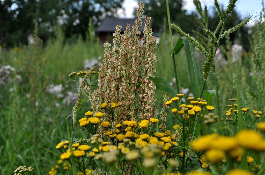Ogród przyjazny alergikom