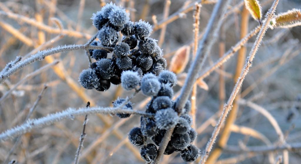 Zimowa pielęgnacja ogrodu. Część 1