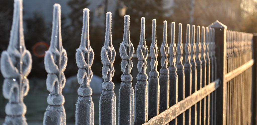 Zimowa pielęgnacja ogrodu. Część 2