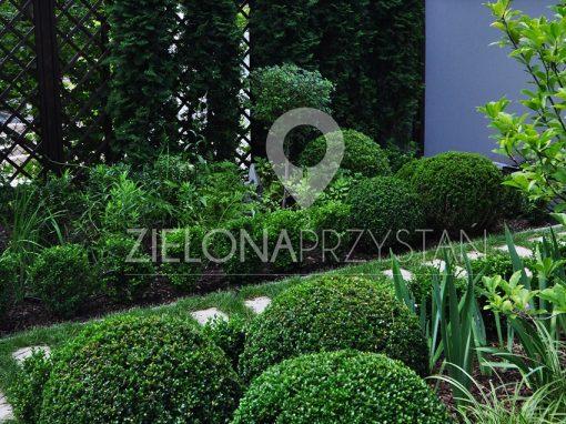 Ogród z klonem japońskim